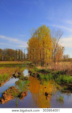 Golden sun lit trees in spring time in Ohio marsh lands