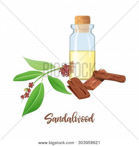 Sandalwood Essential Oil In Glass Bottle With Cork, Chandan Leaves, Sticks, Aromatherapy, Perfume, S