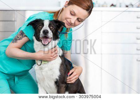 Young veterinary doctor examining dog at clinic