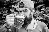 Quench thirst. Man relaxing enjoying beer hot summer day. Hipster brutal bearded man hold mug cold fresh beer. Alcohol drink and bar. Craft beer is young, urban and fashionable. Beer and ale concept poster