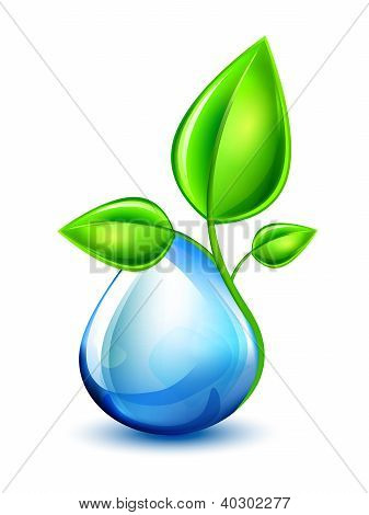 Sprout_water