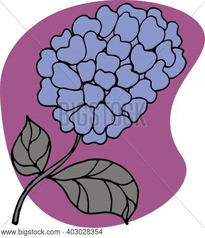 Hydrangea, Hydrangea Flower With Delicate Purple Petals And Leaves, On A Purple Background, Flowers,