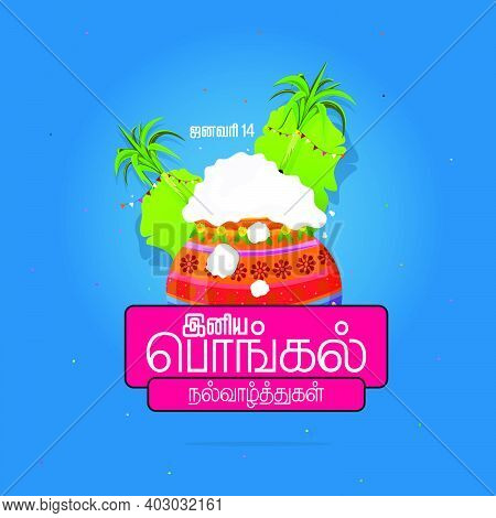 Happy Pongal Religious Festival Of South India Celebration Background And Happy Pongal Translate Tam