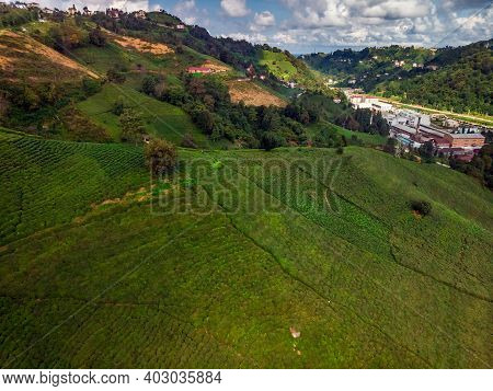 Aerial View Of Karadeniz, Turkey. Endless Nature With Mountains And Hills. Tea Plantations And Peopl