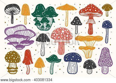 Big Set Of Forest Mushrooms. Ink Vector Illustration. Multicolored Design. Botanic, Nature.