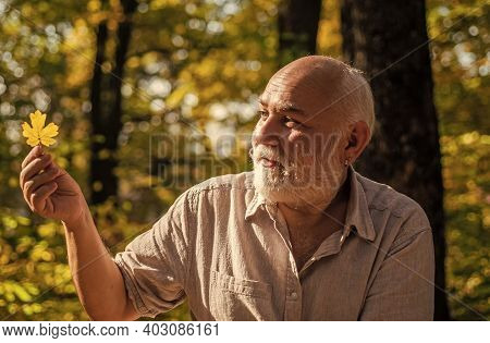 Keep Cheerfulness. Pensioner Hiking In Forest On Sunny Autumn Day. Happy Man Enjoy Autumn Nature. Ol