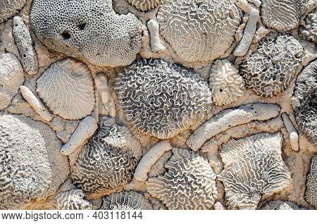 Details On A Wall Made Of Coral Reef At Akumal Beach, Quintana Roo, Mexico