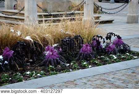 Planting Perennial Flowers On A Flowerbed In A City Flowerbed On The Square. Grow Grasses And Bienni