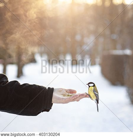 A Titmouse Sits On A Hand, A Bird Flew To A Man For Seeds In A Cold Winter, Feed The Birds In The Pa