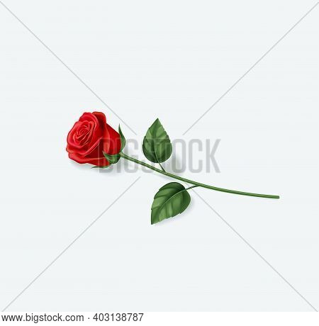 Realistic Red Rose On White Background. Vector Illustration Eps 10