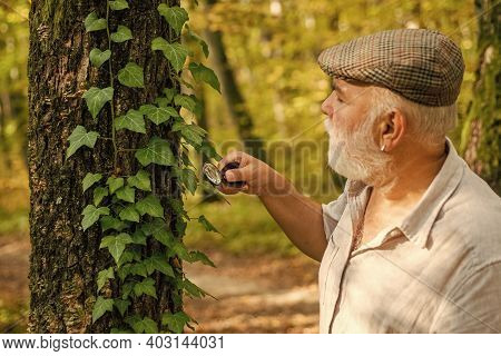 Research For Nature Protection. Old Man Use Magnifying Glass In Nature. Senior Person Do Forest Rese