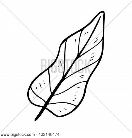 Philodendron Leaf Stylized Vector Illustration.leaves Of Palm Tree Philodendron Isolated On White Ba