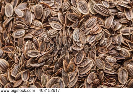 Pile Of Dill Seeds. A Mixture Of Different Spices Close Up. Textures Of Colorful Spices And Condimen