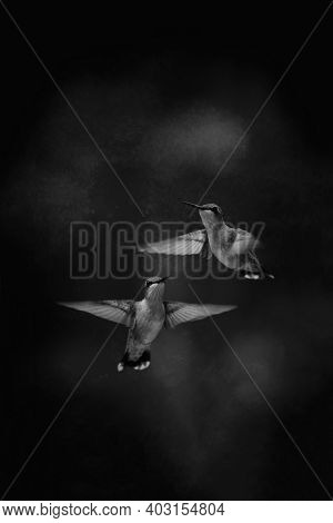 Two hummingbirds on a black and white background with added grain texture