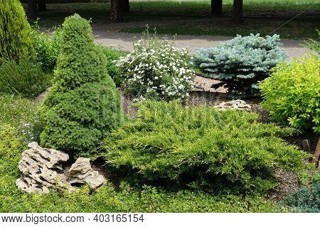 Flowering White Shrubby Cinquefoil, Juniper, Stonecrop, Blue And White Spruces In The Rock Garden