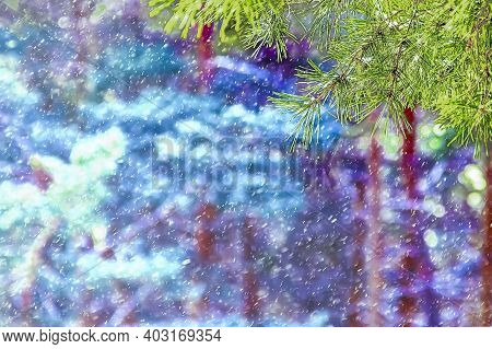 Winter Background Of Pine Branch And Blurred Winter Forest With Running Snow And Bokeh.forest Snow B