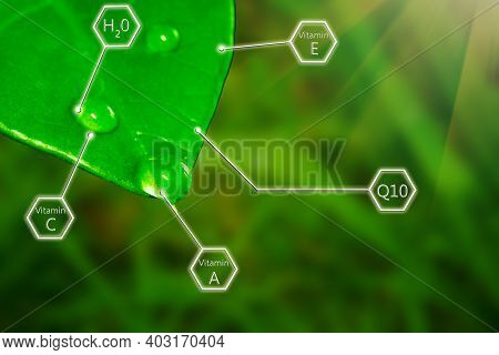 Green Leaf Of Plant With Herbal Essence, Oil Or Water. Vitamins And Ingredients Of Natural Cosmetics