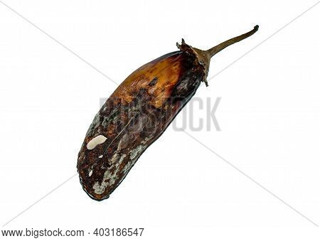 Decayed, Rotten Eggplant. Old Vegetable With Mold Isolated On A White Background.