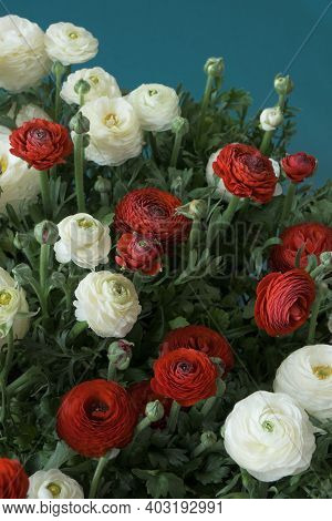 Ranunculus Bouquet Background.spring Flowers. Buttercups Flower. White And Red Ranunculus Flower Bou