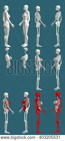 12 Hi-res Renders In 1, Womans Body With Skeleton And Organs - Physiology Examination Concept - Digi