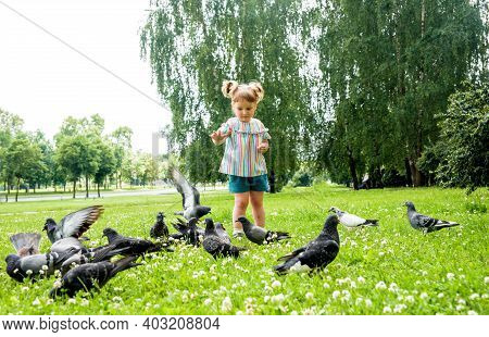 Kid Is Feeding Pigeons In City Park Outdoors.little Baby Girl Running Near Doves. Chasing Pigeons, H