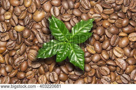 Roasted Coffee Beans. Fresh Roast. Collage Of Coffee Beans With Coffee Leaves. Eco Coffee, Green Cof