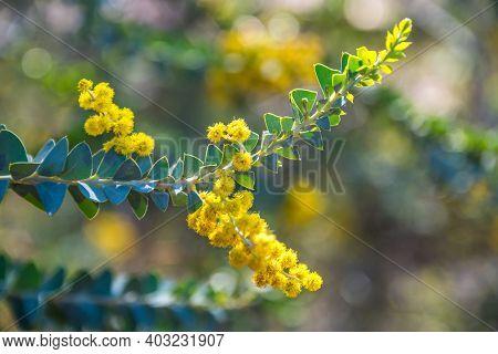 A Yellow Wildflowers In Boyce Thompson Arboretum Sp, Arizona