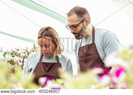Two Garden Workers Growing Plants In Greenhouse And Taking Care Of Flowers. Concentrated Gardeners T
