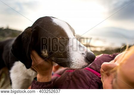 The Girl Plays And Hugs The Dog, Traveling On The Mountain. A Young Girl Plays With Her Dog In Natur