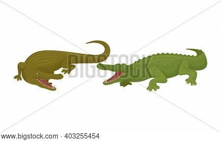 Crocodile As Green Predatory Semiaquatic Reptile Vector Set