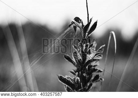 Trendy Color Of The Year 2021 Ultimate Gray. Dry Beautiful Plant With A Web Close-up. In Autumn The