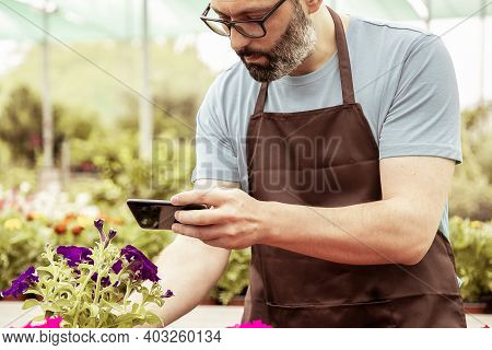 Cropped View Of Male Gardener Shooting Potted Plants On Mobile Phone. Caucasian Bearded Man Wearing