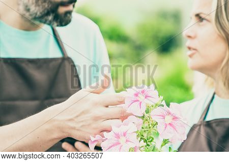 Blurred Cropped Gardeners Talking About Petunia Flowers. Beautiful Potted Plant With Soft Pink Petal