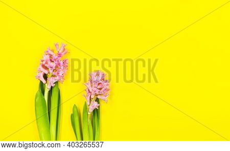 Two Pink Flowers On Spring Or Summer Yellow Background With Copy Space.