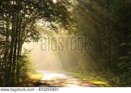 Road path autumn forest Nature landscape Nature tree sunrise Nature background landscape Nature background woods Nature landscape Nature background landscape Nature landscape Nature background landscape Nature background Nature landscape Nature landscape.