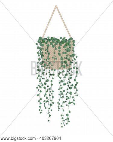 Modern Houseplant Senecio Rowleyanus Or Known As String Of Pearls Succulent. Vector Illustration On