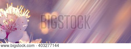 Floral Background In Lilac Soft Colors. Blurred Floral Background With Diagonal Lines. White Apricot