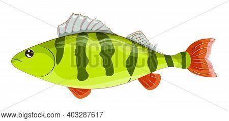 Vector Yellow Perch, Striped Perch, American Perch, North America Fish Native, Picture In Hand Drawi