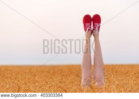 Sexy Legs Sticking Out Of Wheat Field In Sunny Day. Slender Female Legs On Field And Sky Background