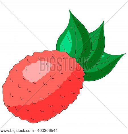 Drawn Single Fruit Lychee And Leaf In Color
