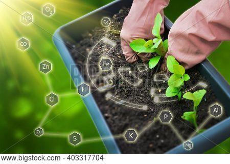 Gardener Planting Plant In The Yard. Seedlings Growing From Soil. Seasonal Works In Garden. Concept