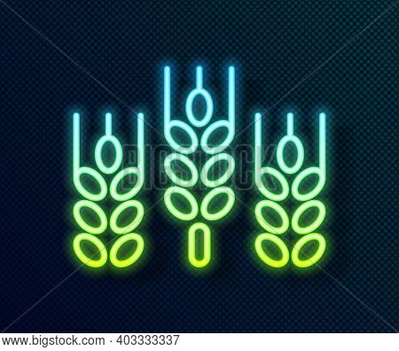 Glowing Neon Line Cereals Set With Rice, Wheat, Corn, Oats, Rye, Barley Icon Isolated On Black Backg