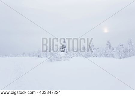Northern Cold Landscape - Frozen Forest Tundra Under Deep Snow In A Frosty Haze