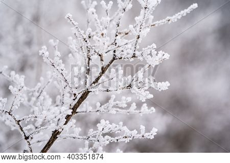 Beautiful Rime Ice Covering Dead Branches In Winter, Taken In Minnesota