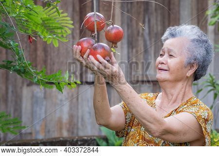 Senior Woman Smiling And Touching Ripe Pomegranates Fruit (punica Granatum) At The Tree While Standi