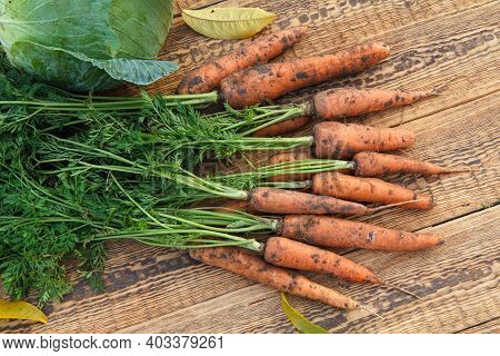 Just Picked Carrots And A Cabbage On The Wooden Boards. Just Harvested Fresh Vegetables. Ripe Vegeta