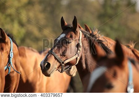 Horse head stallion mare colt foal pet Nature sunrise sunset Nature background pet Nature animal Nature pet Nature background animal horses Nature background Nature pet meadow field Nature background mammal dusk Nature background pet Nature background.