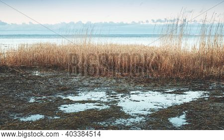 Gulf Of Finland Coastal Landscape With Shore Water And Dry Coastal Reed