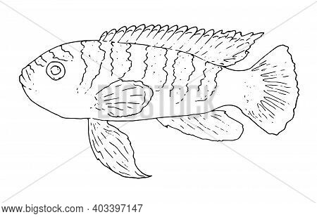 Cute Tropical Fish-picture For Coloring. Vector Linear Fish Is An Animal Design Element. Aquarium Fi