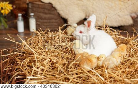 Baby White Little Rabbit. Easter Holiday Concept. Easter Cute Bunny Sitting With Basket Of White Egg